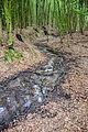 Blomberg - 2015-06-14 - Diestelbach (Blomberger Wald) (2).jpg