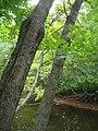 Bloomfield Provincial Park IMG 8215 (1849027504).jpg