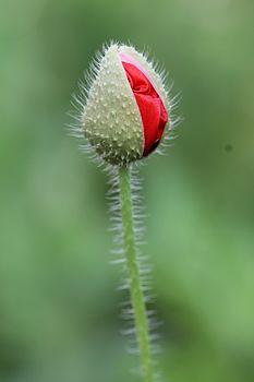 Blooming of flower.jpg