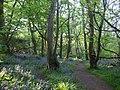 Bluebell woods, St Loy - geograph.org.uk - 649867.jpg