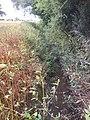 Blytham Beck - geograph.org.uk - 543579.jpg
