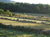Bocage en Galicia.JPG