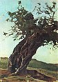 Bogaevsky Old Tree Trunk.jpg