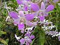 Boholflora5.jpg