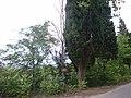 Bonita flora cerca de la Fuente nueva - panoramio.jpg