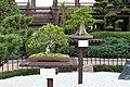 Bonsai (33228225006).jpg