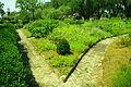 Boone-hall-gardens-sc2.jpg