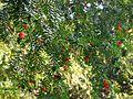 Botanični vrt (3990156831).jpg