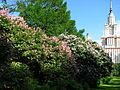 Botanical Garden of Moscow State University 01.JPG