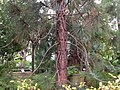 Botanischer Garten Düsseldorf - Orangerie 2.jpg
