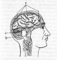 Brain-Konkani Vishwakosh.png