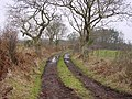 Bridleway to Woods - geograph.org.uk - 118268.jpg