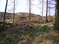 Broughton Moor Forest - geograph.org.uk - 313326.jpg