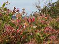 Bruny Island flowers.jpg