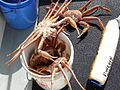 Bucket of crab.jpg