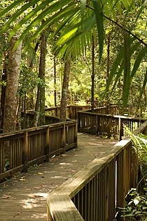 Buderim Town in Queensland, Australia