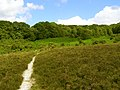 Burley Hill, New Forest - geograph.org.uk - 211534.jpg
