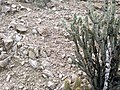 Butcher Jones Trail - Mt. Pinter Loop Trail, Saguaro Lake - panoramio (101).jpg