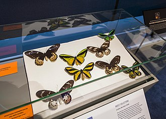 NTNU University Museum - Image: Butterflies in exhibition on Illegal trade