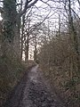 Byway in White Ash Wood - geograph.org.uk - 1178735.jpg