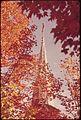 CHURCH SPIRE FRAMED BY SUGAR MAPLE FALL FINERY AT - NARA - 554700.jpg