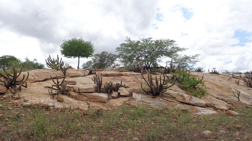 Caatinga Xiquexique pedras em Rio Grande do Norte