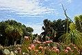 Cactus Garden At Stanford - panoramio.jpg