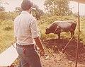 Calabazas Archaeology Site Honduras 1980 02.jpg