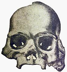 220px Calaveras Skull