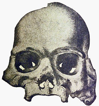 Calaveras Skull - The Calaveras Skull, from William Henry Holmes' preliminary debunking of it