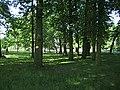 Caldecott Park, Rugby, grove of oaks - geograph.org.uk - 1332283.jpg
