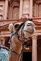 Camel in Petra2.jpg