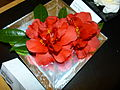Camellia japonica 'Bob Hope'.jpg