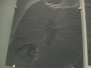 <i>Canadia</i> (annelid) Species of annelid (fossil)