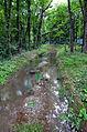 Canal du Boiron Tolochenaz (4).JPG