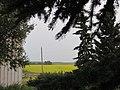 Canola field framed by Spruce tree.jpg