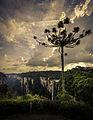 Canyon Itaimbezinho IV.jpg