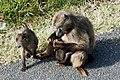 Cape Town 2012 05 16 0026 (7365150762).jpg