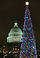 Capitol Christmas tree (6472559909).jpg