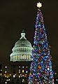 Capitol Christmas tree (6472559909).jpg