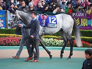Capri (horse) Irish-bred Thoroughbred racehorse