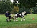 Carriage driving in Erddig Park - geograph.org.uk - 570641.jpg