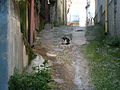 Cat (356427901).jpg