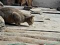 Cat 20190112 134459.jpg