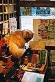 Cat Cafe Neko JaLaLa, Akihabara shop (猫カフェ~ねこ・JaLaLa~秋葉原店) (2010-02-11 14.00.36 by Haya BS).jpg