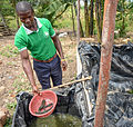 Catfish from a fishpond in Mbazzi, Mpigi district, Uganda 02.jpg