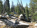 Cathedral Lakes Trek 04 (4246327162).jpg