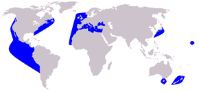 Description de l'image Cetacea range map Short-beaked Common Dolphin.PNG.
