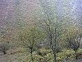 Chalus road 1000 cham - panoramio.jpg