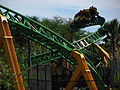 Cheetah Hunt twisted track.jpg